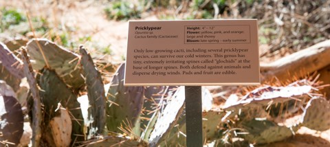 A trail sign labeled pricklypear with cactus in the background