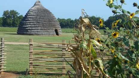 A beehive shaped thatch hut in a field with sunflowers.