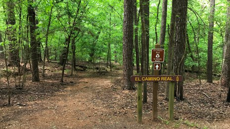 A dirt path leads into a dense broad-leaf tree forest with a historic trail sign.