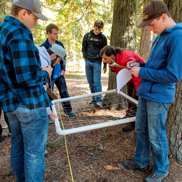 students monitor a plot of land in a forest
