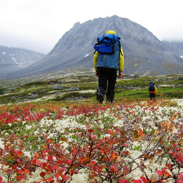 Hikers walking through flower field