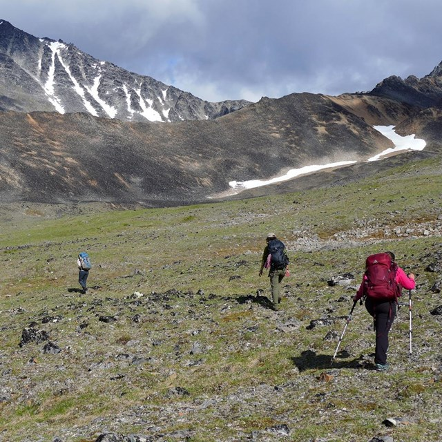 Four backpackers hike on the tundra