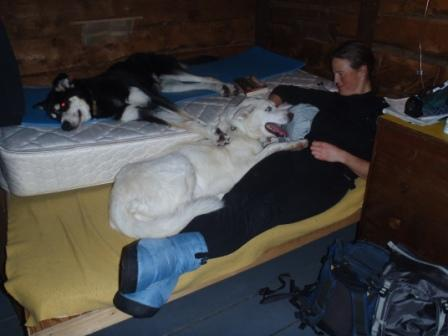 Dogs and humans in patrol cabin after hard day of breaking trail