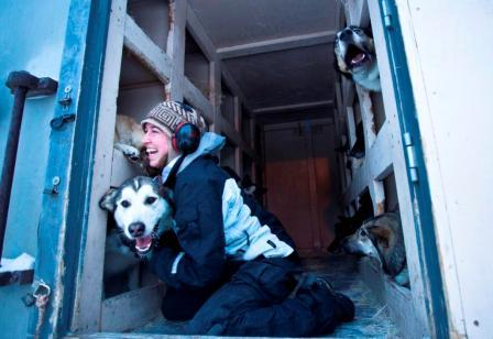 kennels staff putting dogs into truck