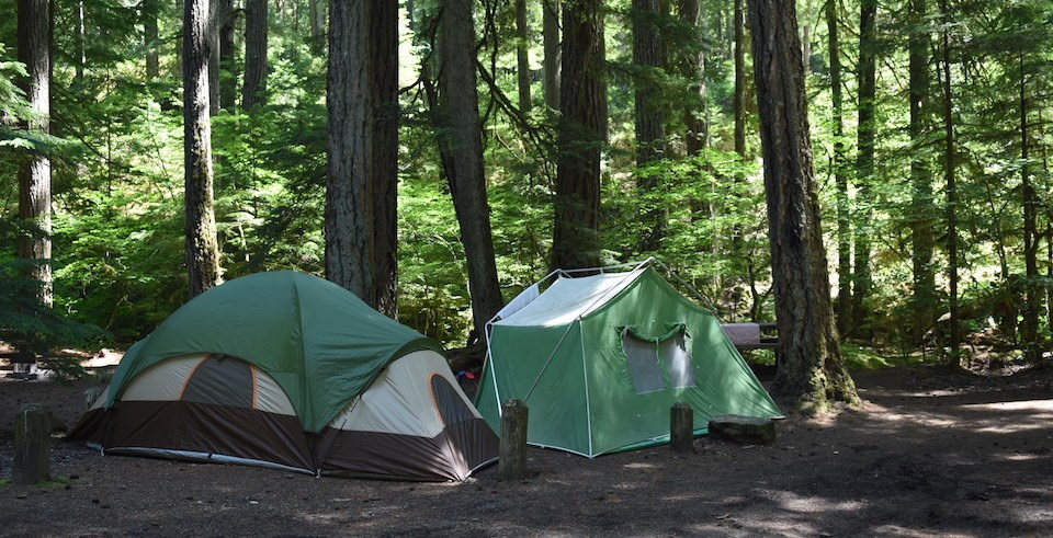 Two green tents surrounded by tall trees.