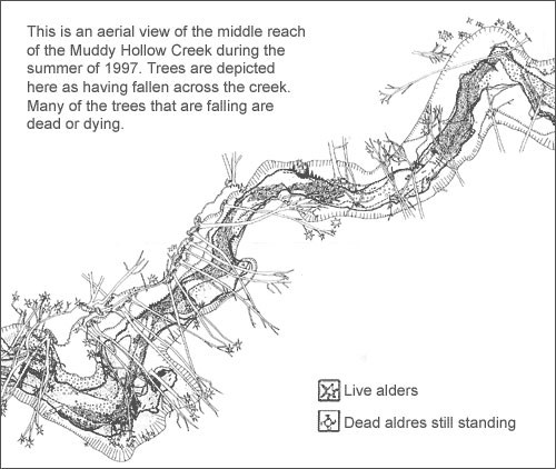 A black and white line drawing of an aerial view of the Muddy Hollow Creek during the summer of 1997. Trees are depicted as having fallen across the creek. Many of the trees that are falling are dead or dying.