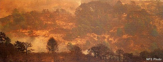 During the Vision Fire, areas of Point Reyes National Seashore were burned in a mosaic pattern.