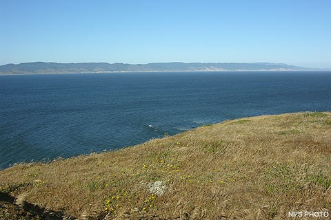 Drakes Bay with grass and wildflowers in the foreground and Inverness Ridge in the background.