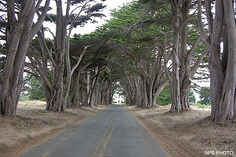 Cypress trees lining a driveway leading to the historic RCA building.