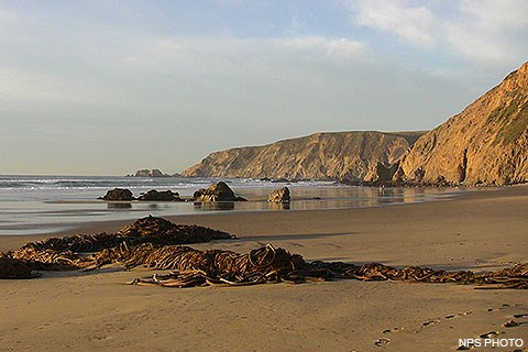 Piles of bull kelp on a sandy beach with the Pacific Ocean on the left and bluffs and cliffs on the right.