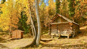 Glenn Creek public use cabin with golden leaves of fall