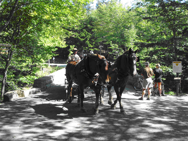 A carriage ride on the carriage roads