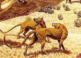 Beardogs had heavy heads and strong jaws.