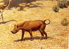 Menoceras, rhino that reached 3 ft. tall at maturity.