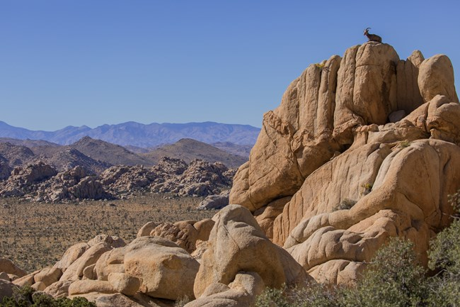 A group of tall tan colored rocks with a bighorn sheep sitting on top.