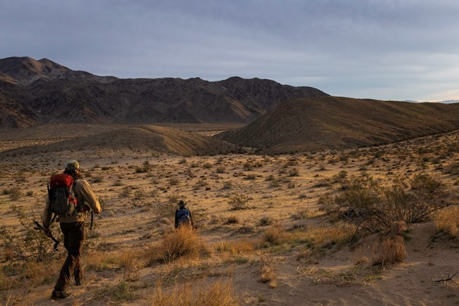 Two researchers hiking towards a mountain surrounded by desert shrubs.