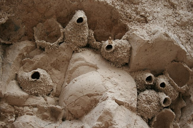 badlands formations with dome-shaped nests.