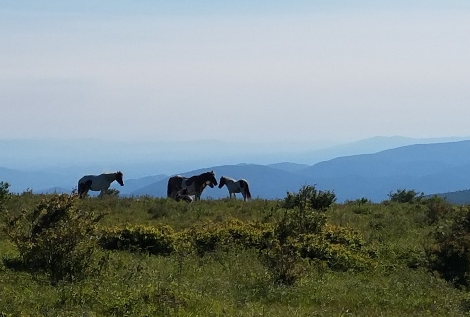 Herd of horses in a meadow