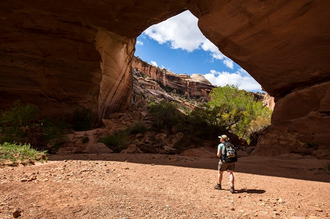 Hiker stands at bottom of canyon looking up at a natural land bridge.