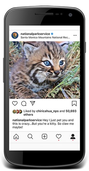 Instagram post from National Park Service showing a young bobcat
