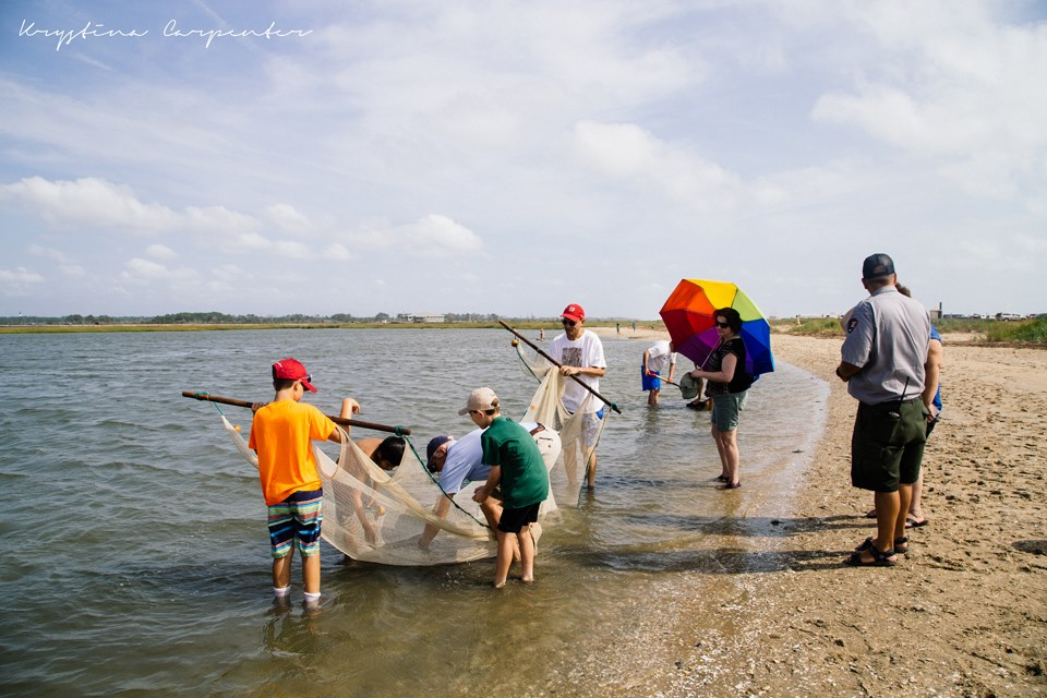 Visitors using seine nets in Toms Cove