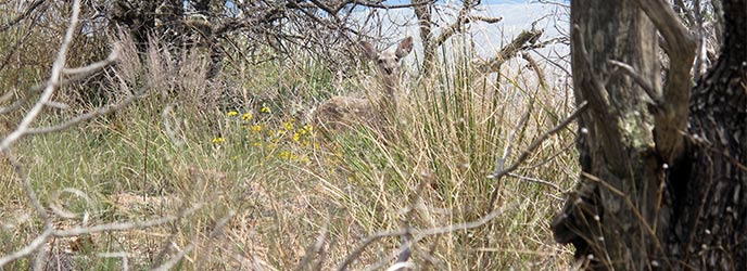 Grasses in the Chisos Mountains