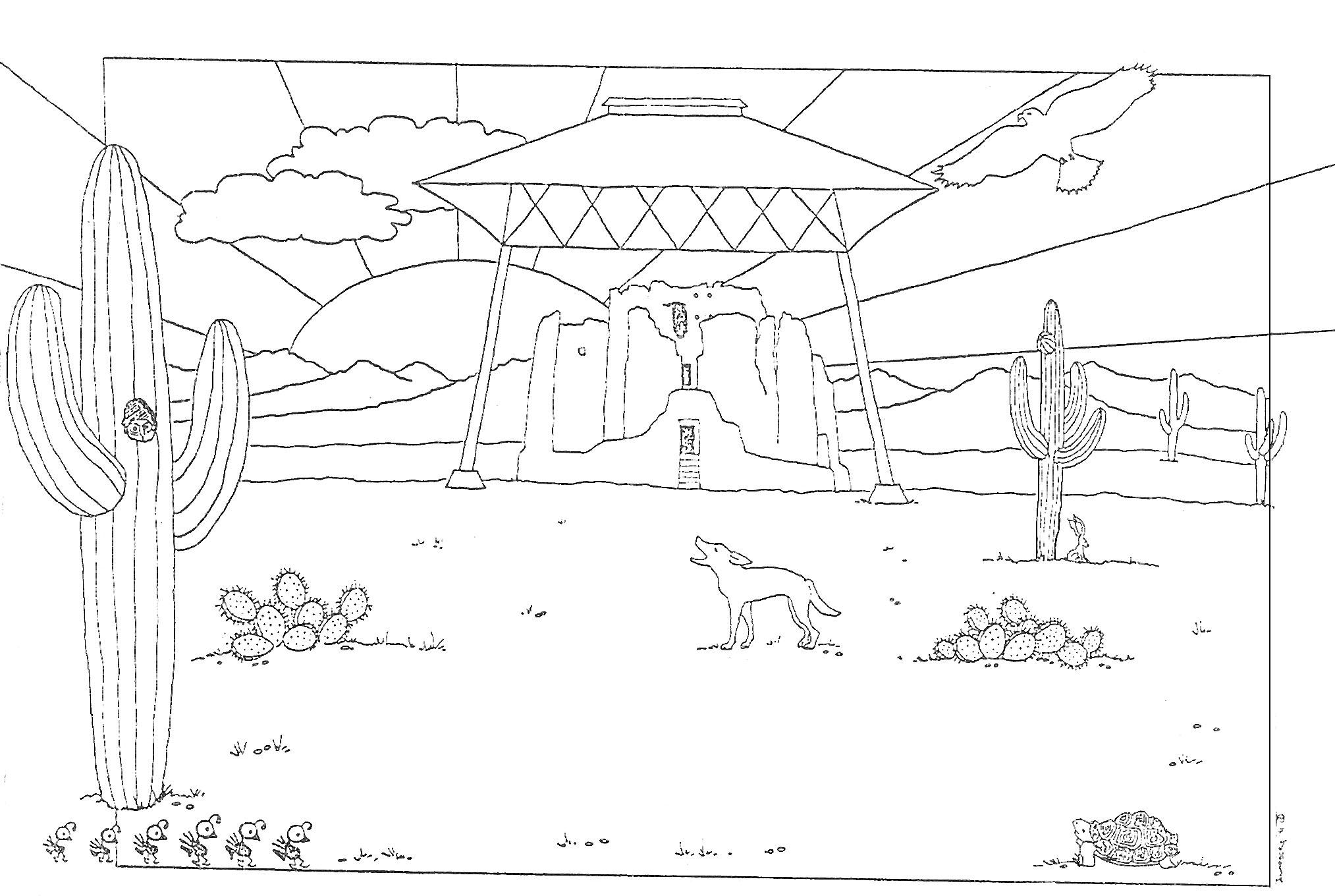 Desert Animals For Kids Coloring
