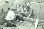 Photo of archeologists cutting prehistoric log for tree-ring-dating