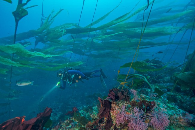 ©Brett Seymour, National Park Service