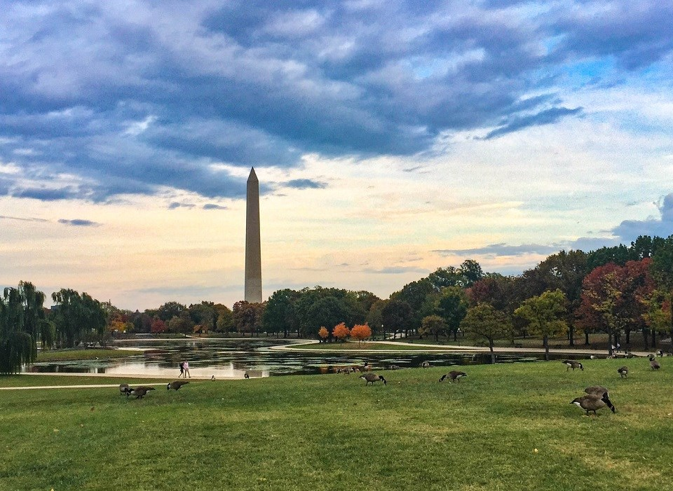 Washington Monument beyond a lake and grass field with geese