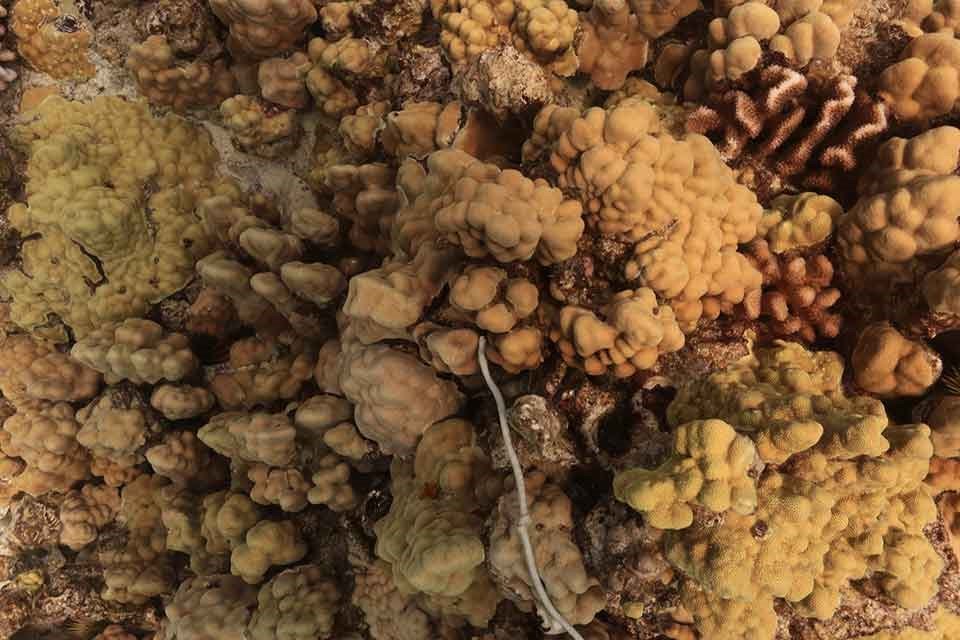 healthy reef: greens and browns visible on the coral