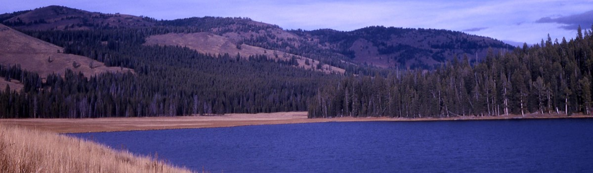 Yellow grass, green trees, and forested mountains surround a blue lake.