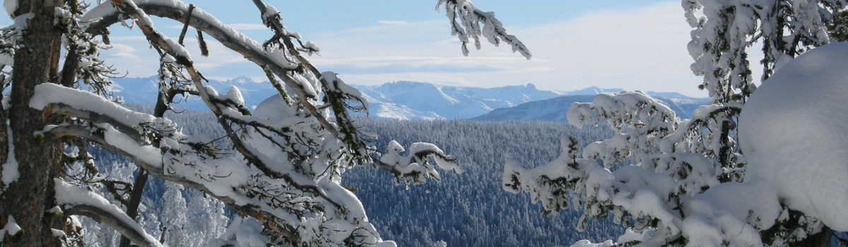 Glimpses of mountain views can be seen through the trees along the Divide Ski Trail.