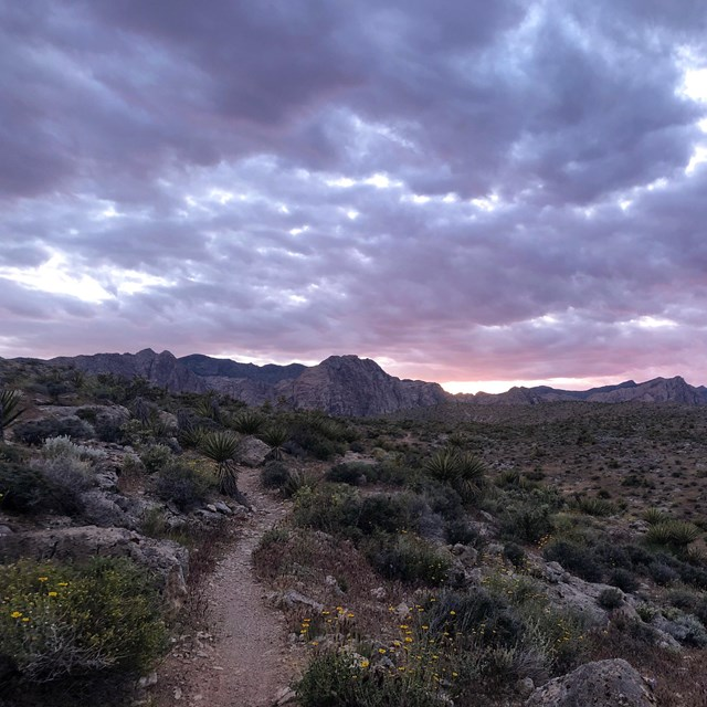 A trail stretches through a shrubby desert, under a pink sunset-sky.