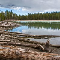 Logs litter the shore of a conifer forest-surrounded lake.