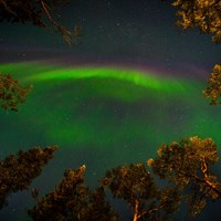 green auroral light in a dark sky, framed by trees