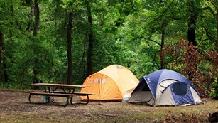 two tents and a picnic table in a green forest