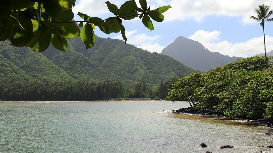 Huilua Pond in  Hawai'i.  Photo by Bob Linsdell, CC BY 3.0