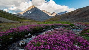 purple wildflowers near a creek in a valley surrounded by steep mountain peaks