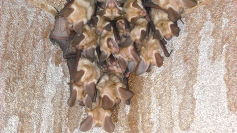 cluster of bats on a wall