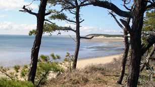 A beach stretches out from an overlook with pine trees.