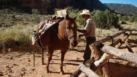 Packhorse and person by wooden fence in a large canyon