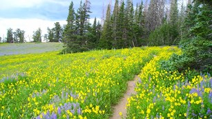 A dirt path leads through wildflowers.