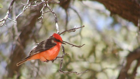 A bright red bird perches in a tree