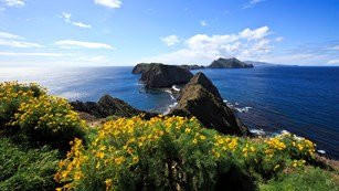 Yellow flowers on bluff overlooking islets. ©Tim Hauf, timhaufphotography.com