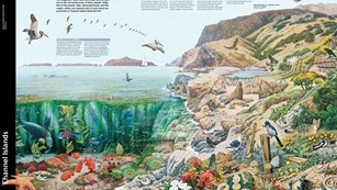 Park brochure drawing of islands and kelp forest.
