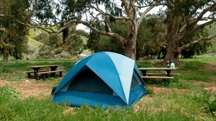 Blue tent in campground with trees. © Kathy de-Wet Oleson