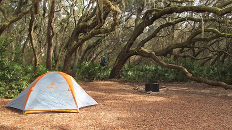 Tent under live oaks with pack hung