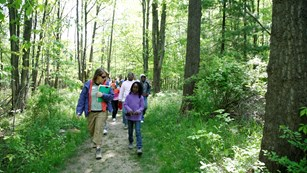 a group of people walking on a trail through the woods
