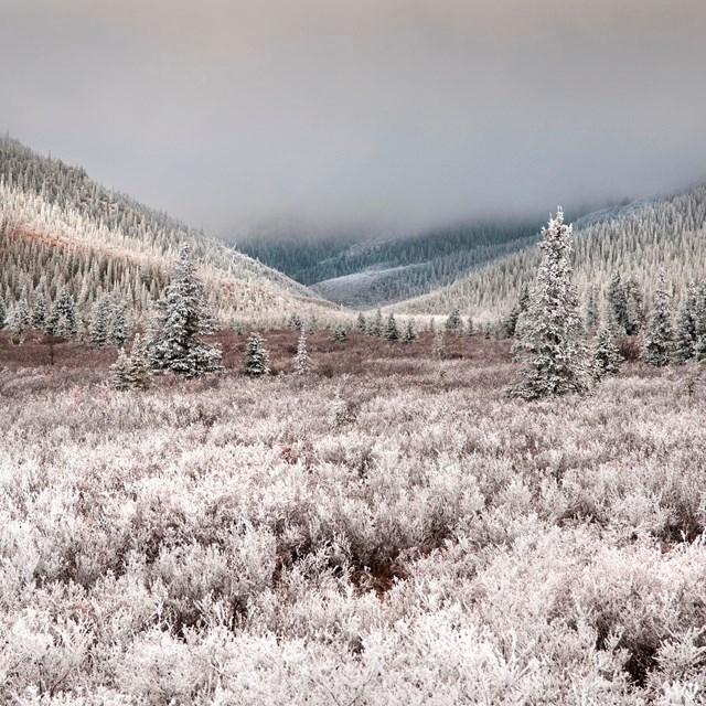 a snow-dusted forest and mountains